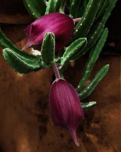 DoA 23 Flora Huernia