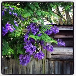 DoA 28 Flora wisteria