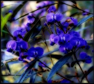 DoA 29 Fabaceae orton