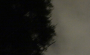 DoA 8A Tree silhouette 1