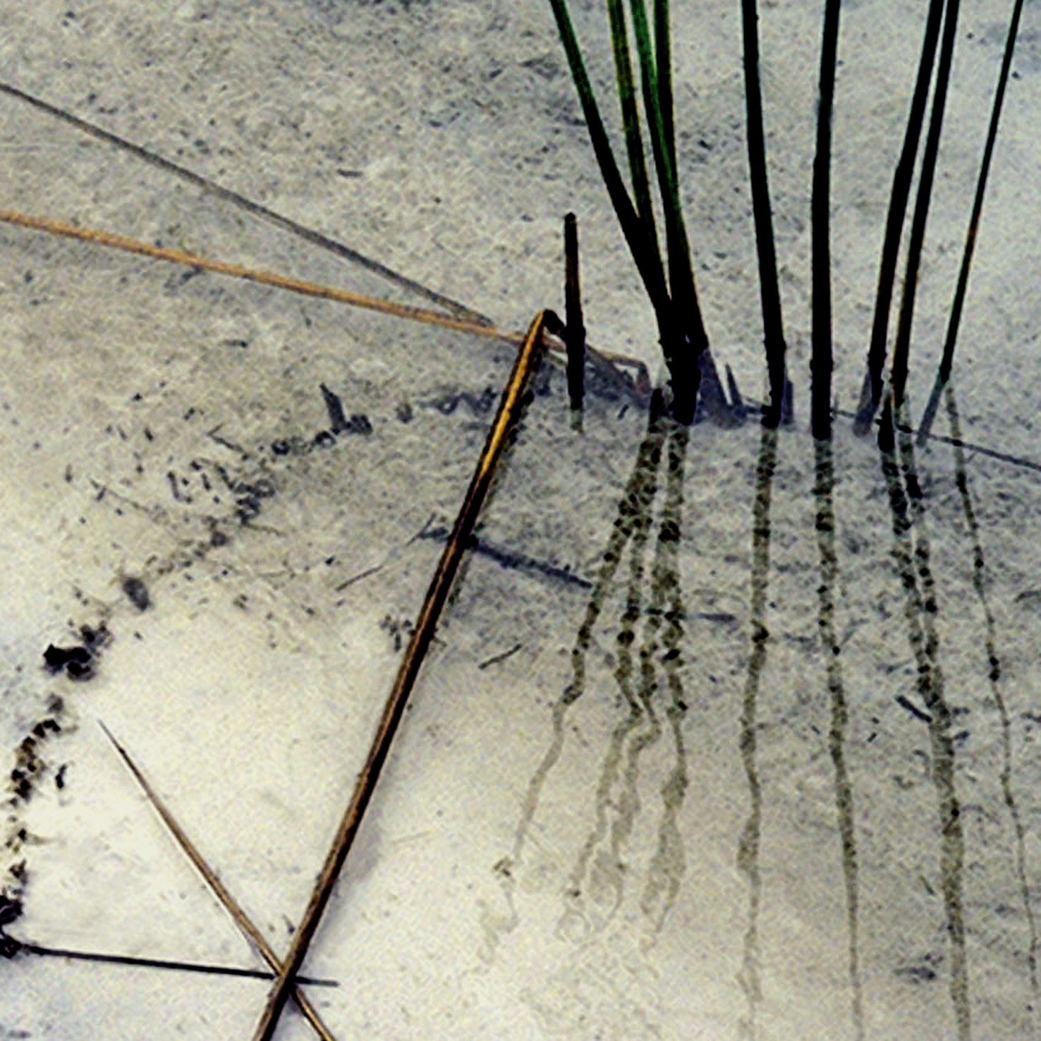 20 reeds & reflection